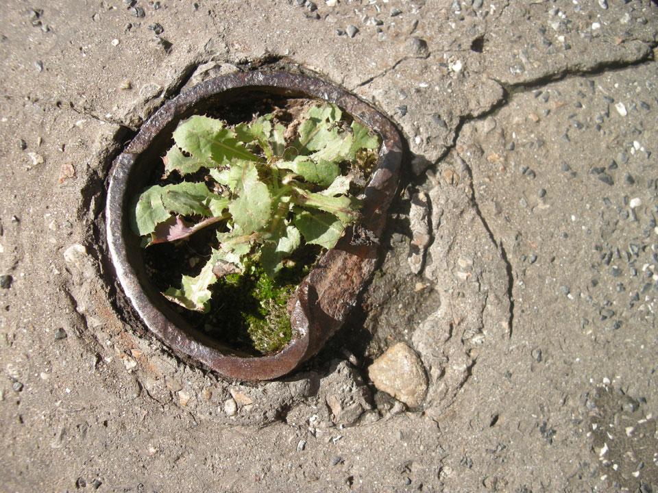 Clandestine flowerbed in city of Milan pavement